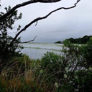 July 24, 2 p.m. Hall's Creek, Cutchogue