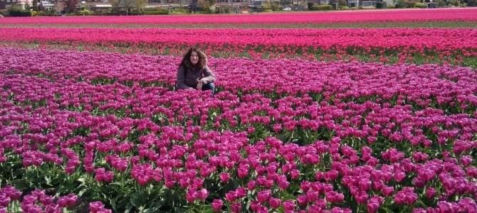 Keukenhof: la ruta de los tulipanes