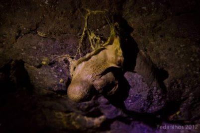 Cogumelos muito loucos nas cavernas