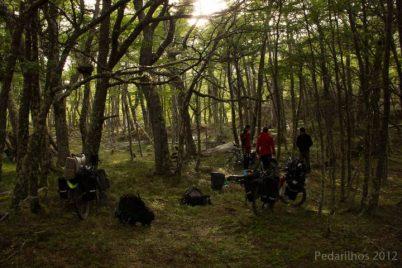 O tão sonhado bosque desta trilha