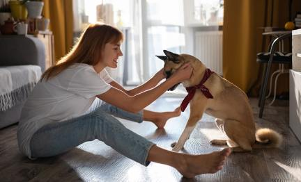 Useful Dog Training Tips For Beginners - Check Out Here