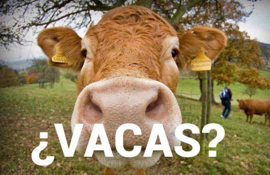 La economía explicada con vacas