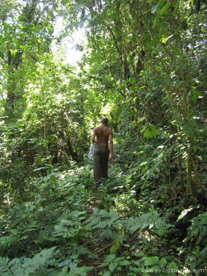 TANZANIA-Arusha trekking KIli