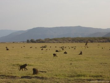 TANZANIA Marangu Manyara