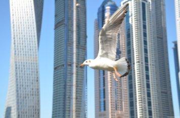 Dubai Marina 84 1