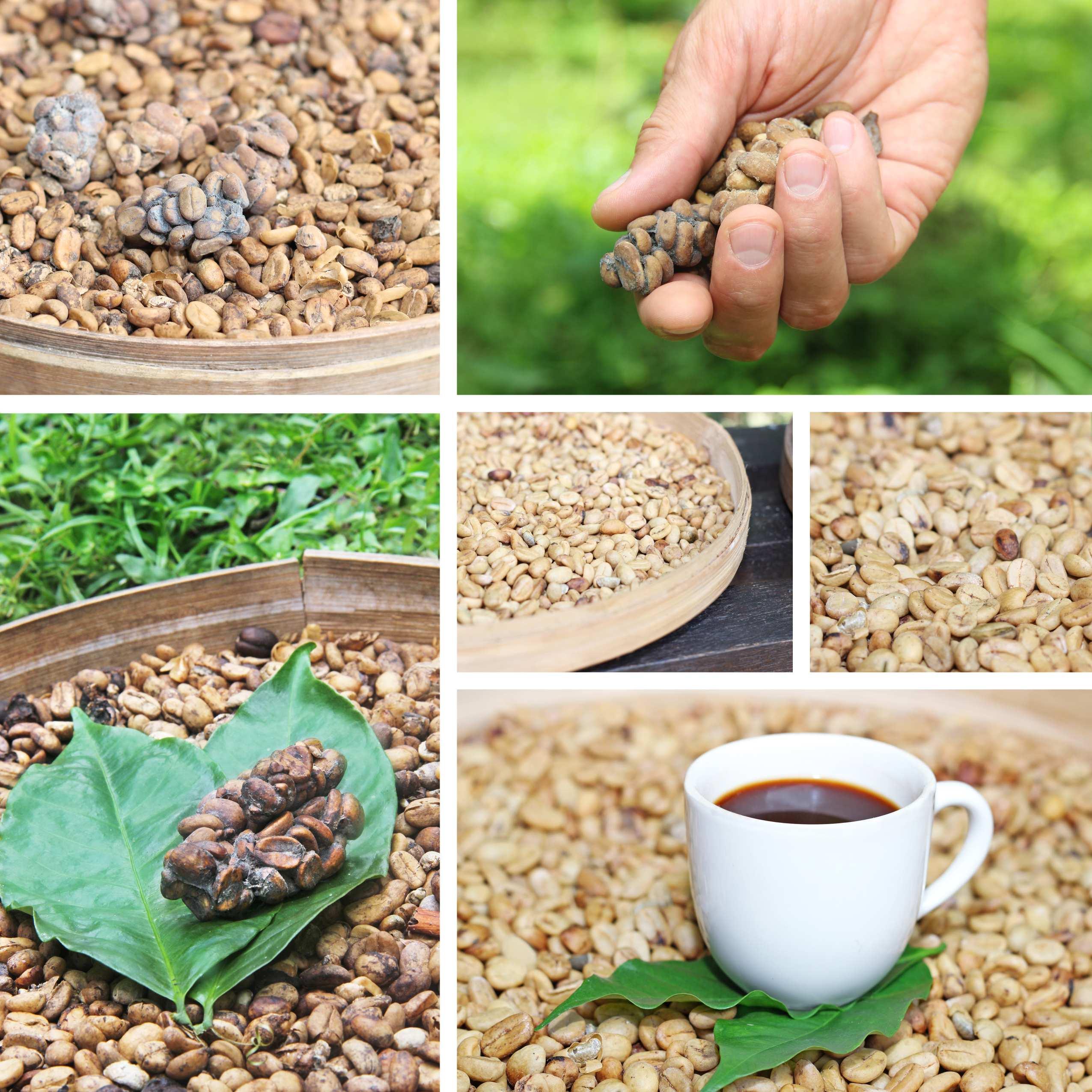 dieta-cafea-verde