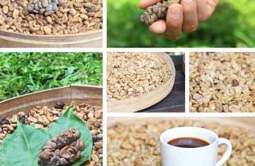 Dieta cu cafea verde