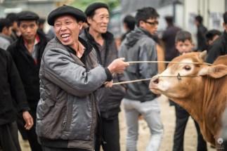 Laughing cow -nay, man - Dong Van