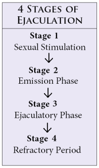 penis stages of ejaculation