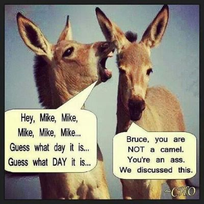 donkey hump day meme - Hump Day Funnies