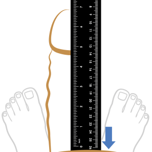 measure erect penis with ruler