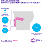 penis cancer incidence