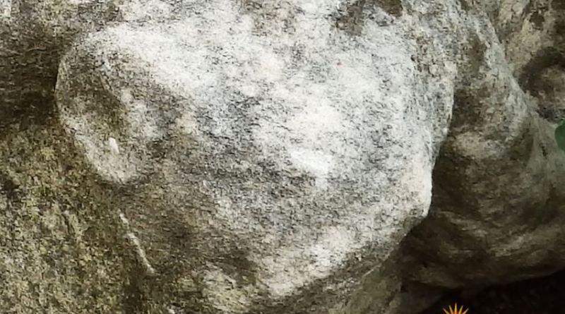Фрагмент од корито со украсување - глава на овен