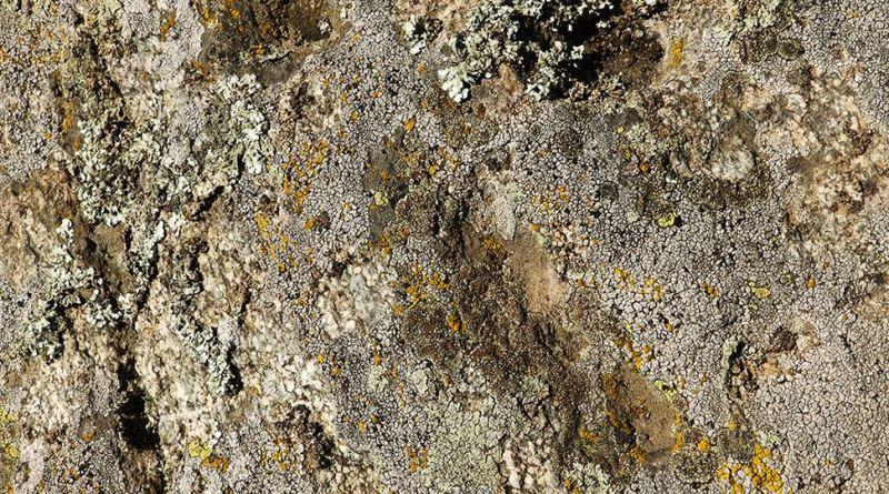 Дел од симболиката на карпата