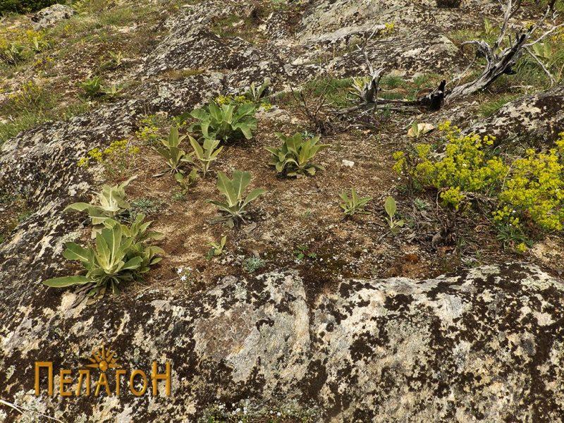 Гробови издлабени во карпа од некрополата 4