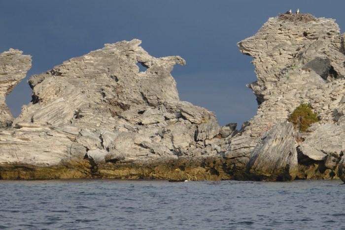 Ospreys on nest, Henrietta Rocks, Rottnest Island.