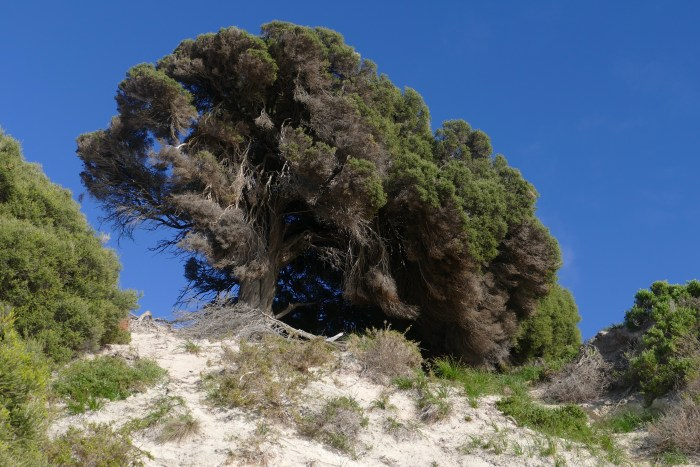 Tea Tree, Porpoise Bay