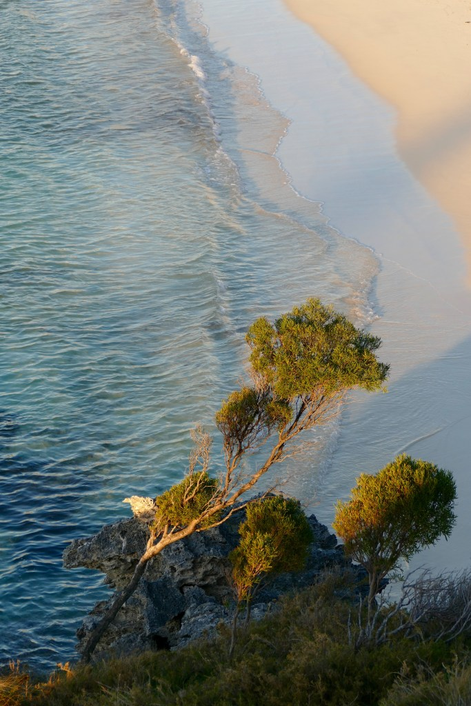 Shoreline, western end of Geordie Bay. All photos copyright Doug Spencer.