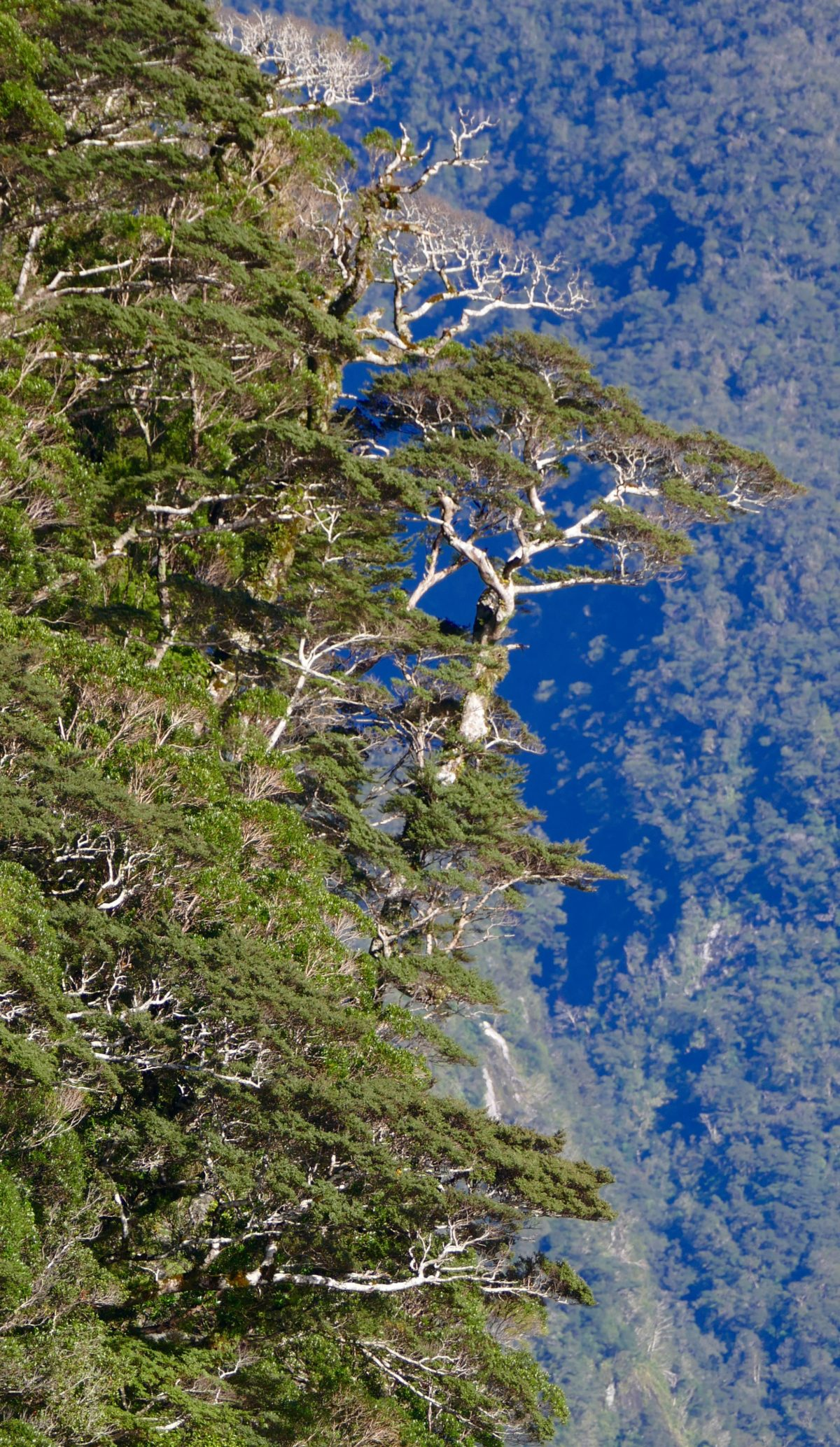"""Catastrophe forest"", Doubtful Sound. All photos copyright Doug Spencer."