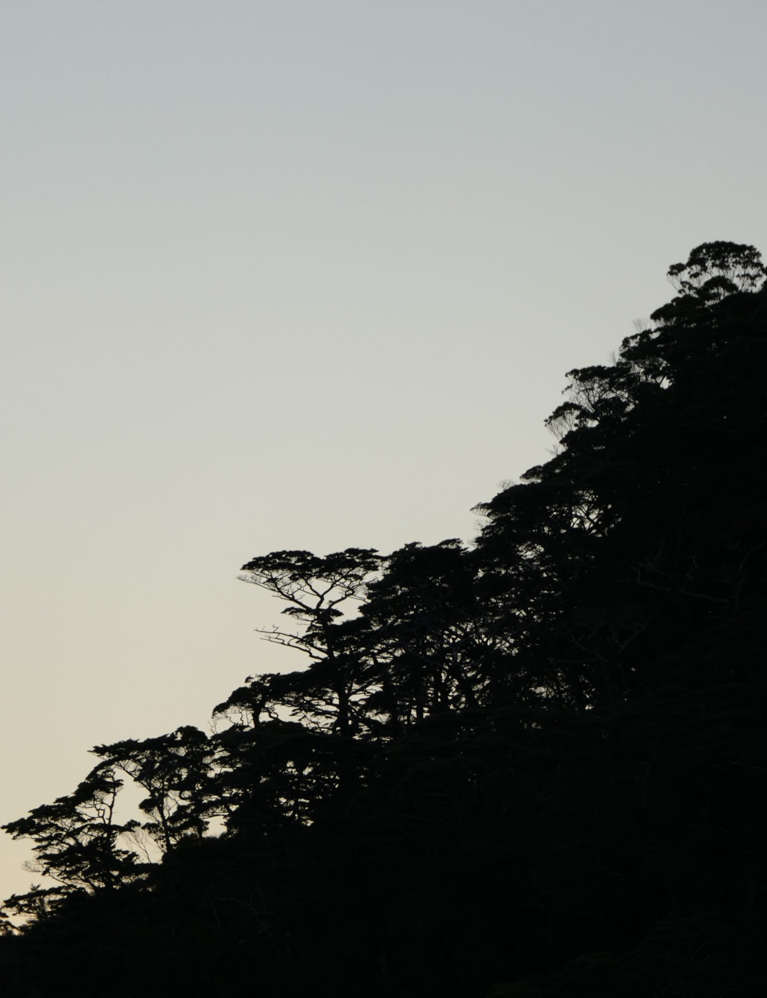 """Catastrophe Forest"", dusk-silhouetted. All photos copyright Doug Spencer."