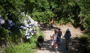 image of Walking Holidays Pelion Greece