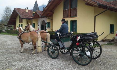 carozza-centro-equitazione-alpina-pellizzano