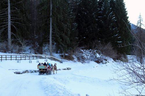 carrozza-centro-equitazione-alpina-pellizzano