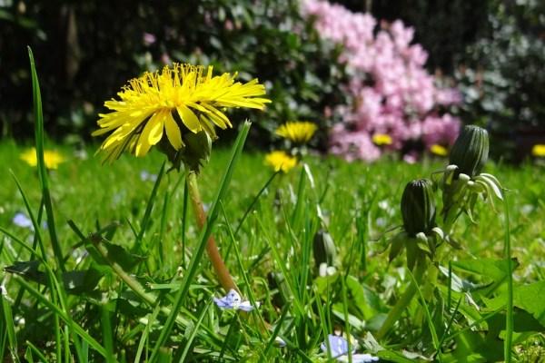 giardino-fiorito-pellizzano-campeggio