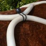 PEMF 8000 Equine Accessory