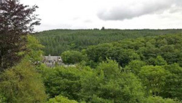 Woodland surrounding Plas Penaeldroch