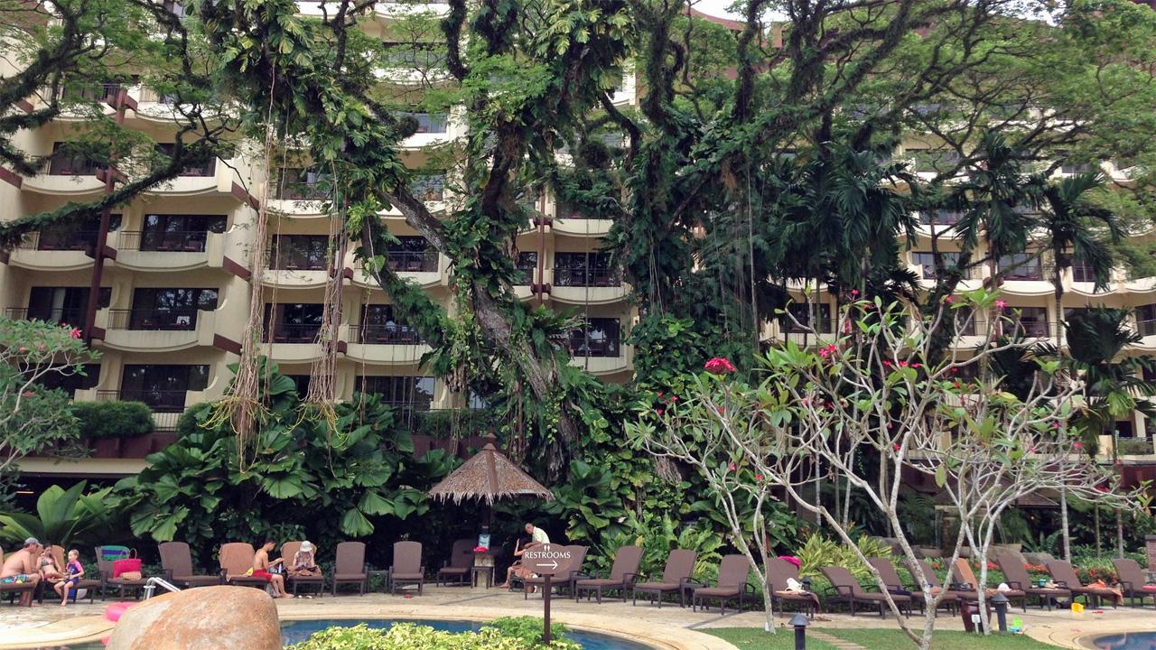 Rasa-Sayang-Resort-Penang-Another-Facinating-Shady-Tree