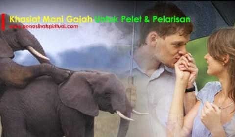 khasiat mani gajah