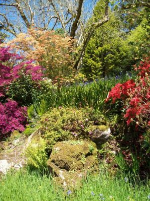 Cornish gardens at Pencarrow