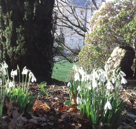 Snowdrop Sundays at Pencarrow