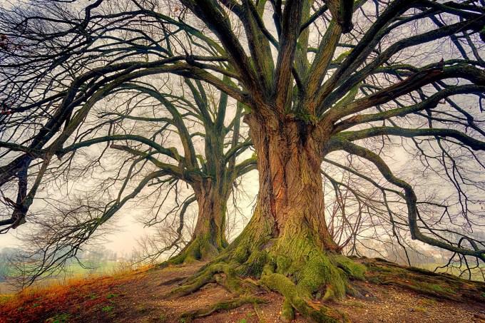 tree-3249744_1920