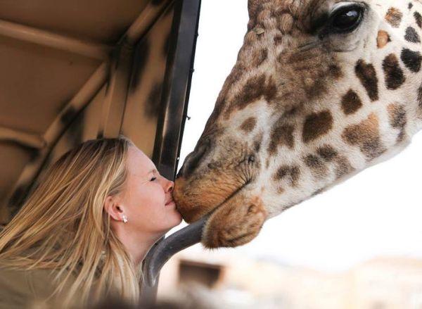 Panfam Kenya Safaris Giraffe Centre