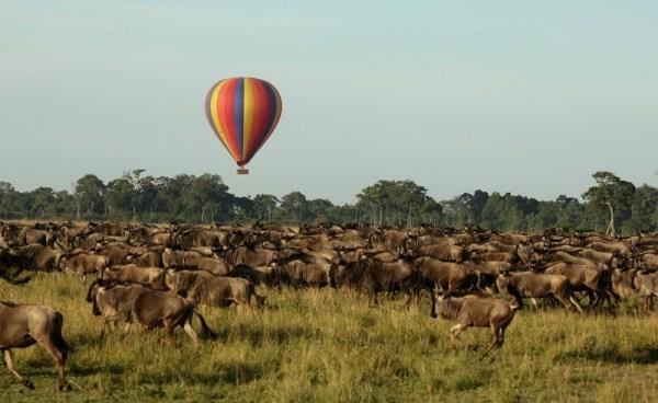 Kenya Safaris and Tours | Penfam Tours and Safaris | Masai Mara Safari Wildebeest migration Kenya Tanzania Safaris