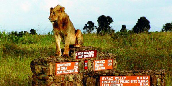 Lion Nairobi National Park | Kenya Tours and Safaris