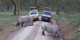 Rhino too close - Lake Nakuru nationa Park | Penfam Tours and Safaris