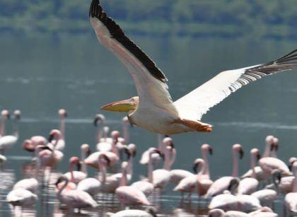 Lake Nakuru Flamingos | Penfam Tours and Safaris