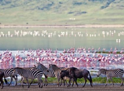 Flamingos at Ngorongoro National Park