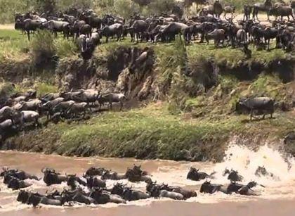 Africa Kenya Safari | Masai Mara Safari Wildebeest migration Kenya Tanzania