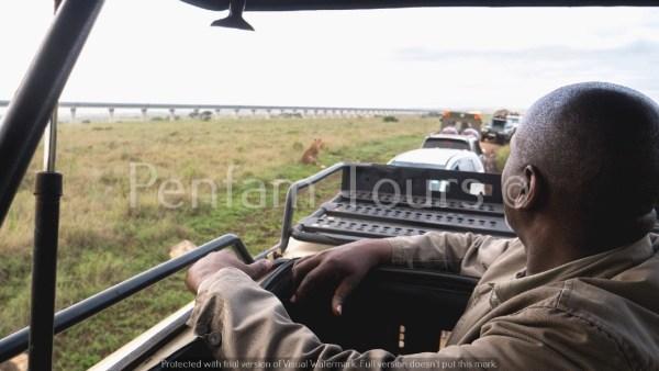 Nairobi National Park tour - lion