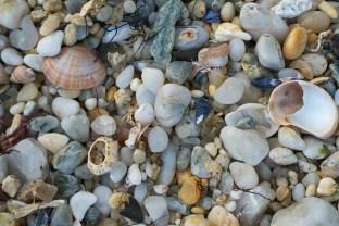 Empty Shell (1)