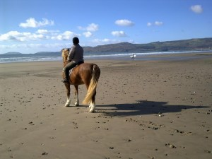 Horse riding - Pen Llŷn Accommodation