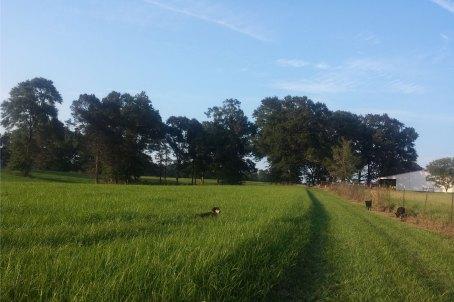 through the field