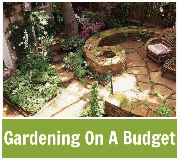 Frugal Gardening For Beginners
