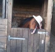 Pony Livery in Harrogate