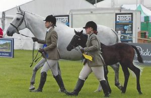 Pennineview Independence - Bramham 2017 Broodmare Class