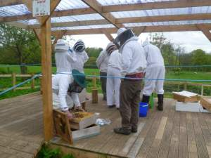 The bees arrive at the apiary